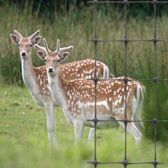 Plastic Deer Fence 100m