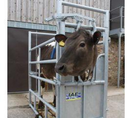 Economy Cattle Crush - Galvanised
