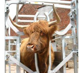 Highland Cattle Crush - Galvanised