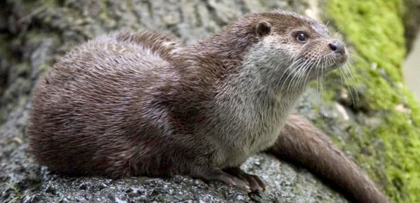 How To Choose The Right Fencing Specification For Otters